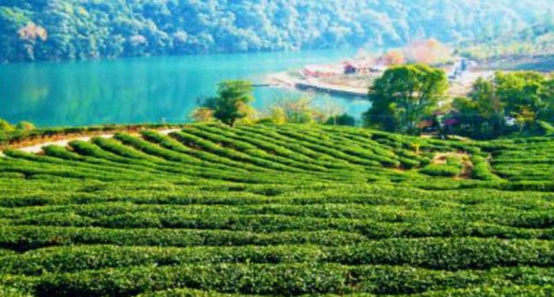 中共安康市委、安康市人民政府关于加快推进安康富硒茶产业全产业链高质量发展的决定