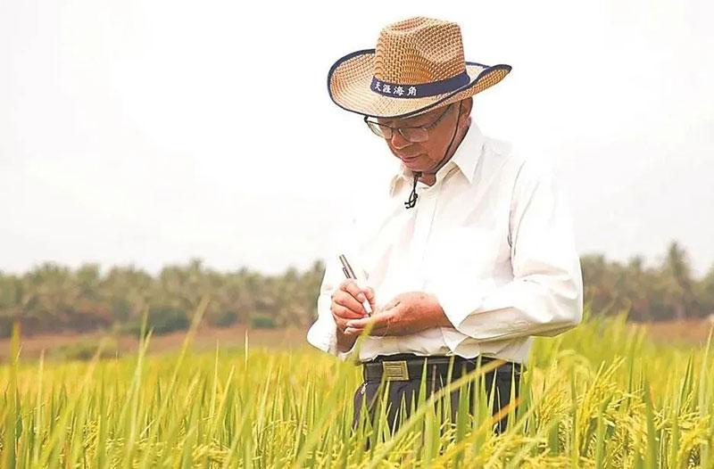国家功能农业科技创新顾问谢华安院士:要让中国人的饭碗端得更牢